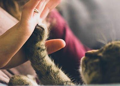 cat hand
